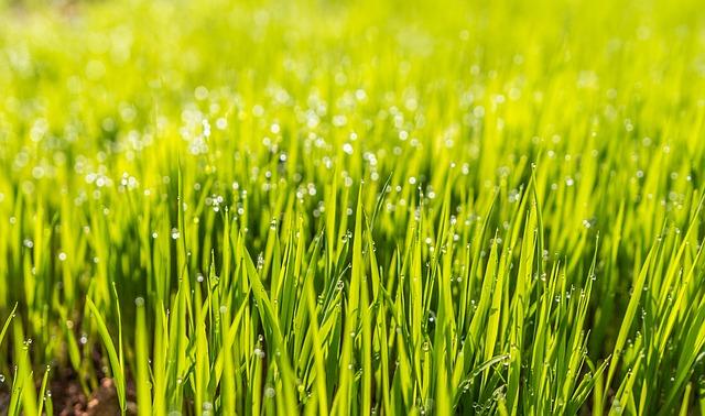 Moderne græsarmering sikrer optagelsen af regnvand